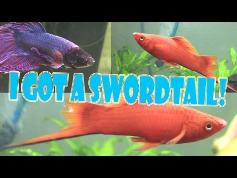 FISH UPDATES!! (I GOT A RED VELVET SWORDTAIL!)