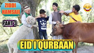 EID I QURBAAN || ZIDDI HAMSAII PART 3 || FUNNY VIDEO BY ULTIMATE ROUNDERS