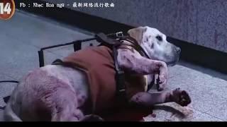 clip cảm động nói về một chú chó xả thân cứu chủ mình thoát khỏi nguy hiểm :((