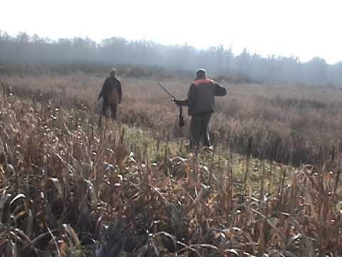Pheasant Hunting Ohio Pheasant Preserve