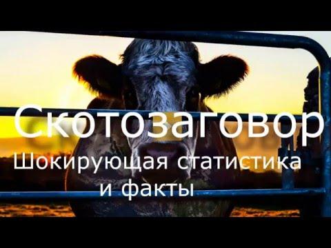 Cowspiracy/Скотозаговор-разрушительное действие мясной промышленности на Эко-систему Земли.