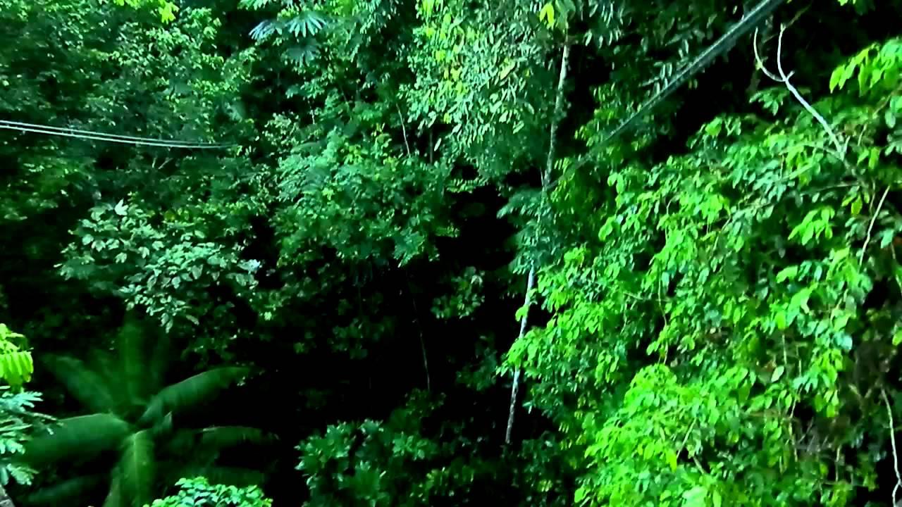 Iwokrama canopy walkway & Iwokrama canopy walkway - YouTube