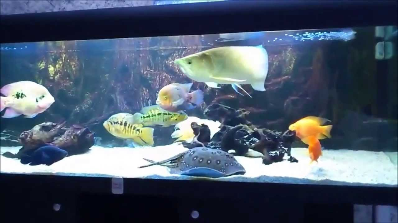 Amazon fish tank 1 youtube for Youtube fish tank