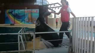 海響館でのイルカとアシカのショー。Dolphin & Sea lion show.