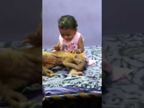 Denjar game on cat baby  viral video / Subscribe my channel