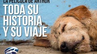 ARTHUR el Perro Ecuatoriano (Toda su historia y su viaje que le cambió la vida hecho película HD)