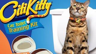 Как легко приучить кошку к унитазу