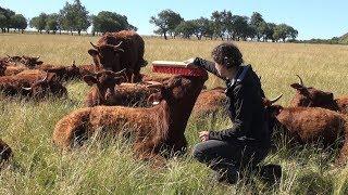 Bien-être animal : «Le bovin doit avoir une bonne image de l'humain»