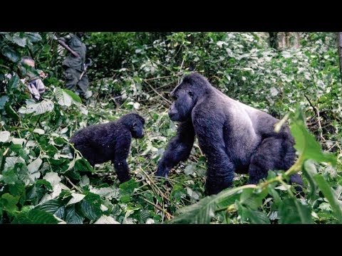 The Mountain Gorillas | Uganda Series Ep 4