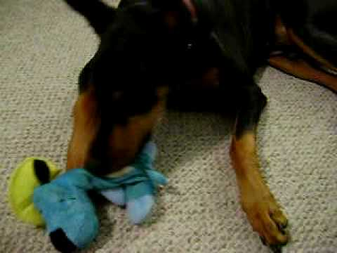 caesar-vs.-puppy-pinata-dog-treat