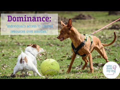 Understanding Dominance: Stopping the Alpha Dog Fallacies