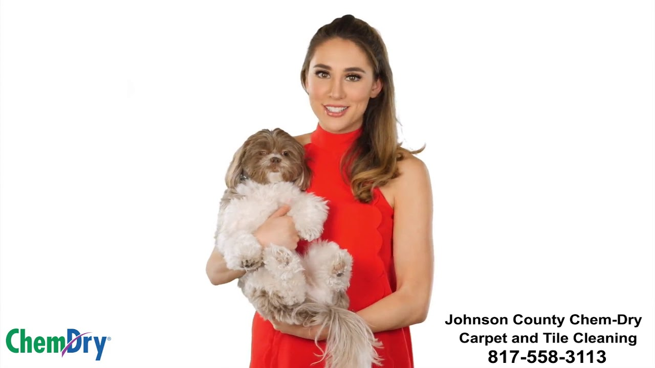 Best Carpet Cleaner For Pet Urine Professional Carpet And Rug Cleaning