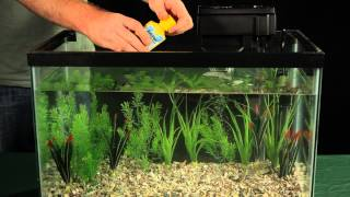 Introducing Fish to Your Aquarium
