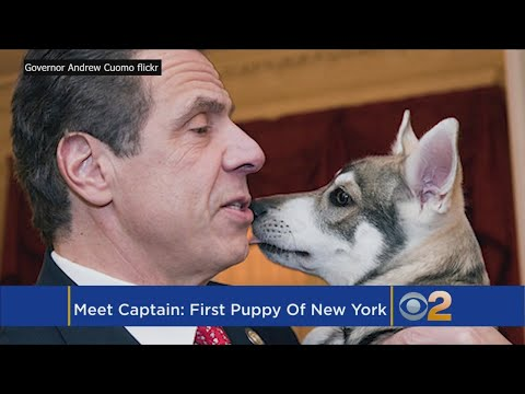 Gov. Cuomo Introduces 'Captain,' The First Puppy