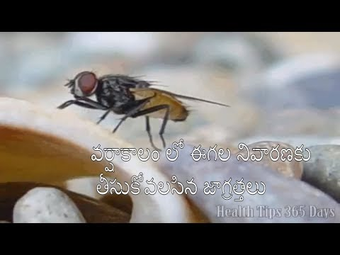 Facts About House Fly And Remedies To Control Them, Housefly,Tips To Control House Flies,House Flies