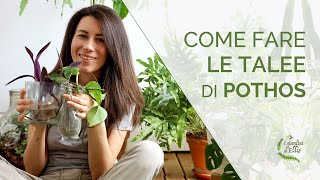 Riprodurre le piante per talea - il Pothos