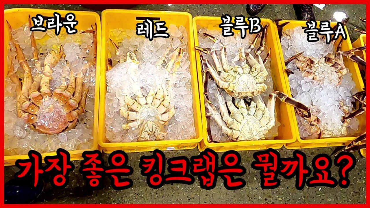 노량진수산시장 킹크랩 고르는방법 가격/노래미, 브란지니 지중해농어구입/ 돌돔사면 붉바리가 서비스??