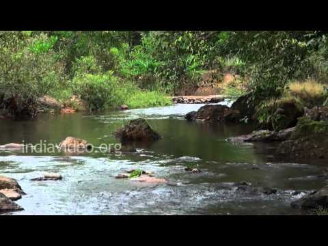 Nature's sound, Wonderful sound of a stream