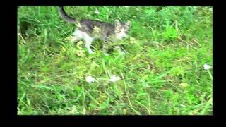 Самые  обычные котята 2