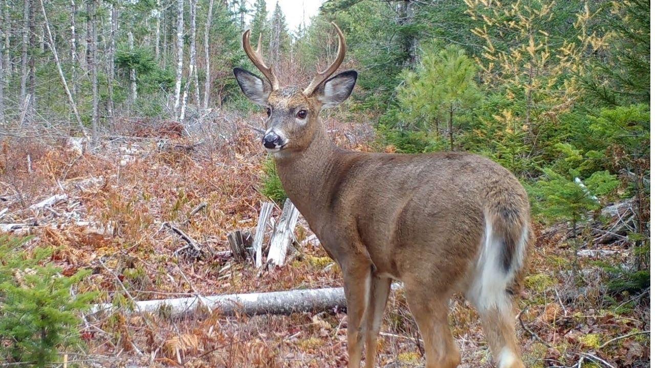 Maine Wildlife Trail Video week ending 11.13.2020