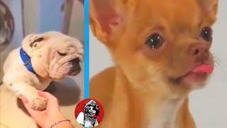 LOS ARREPENTIMIENTOS MAS TIERNOS DE ANIMALES QUE NUNCA TE IMAGINASTE | OSCAR JACK