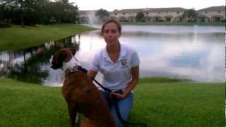 Telling Her Story About Her Dog Training In Fort Lauderdale