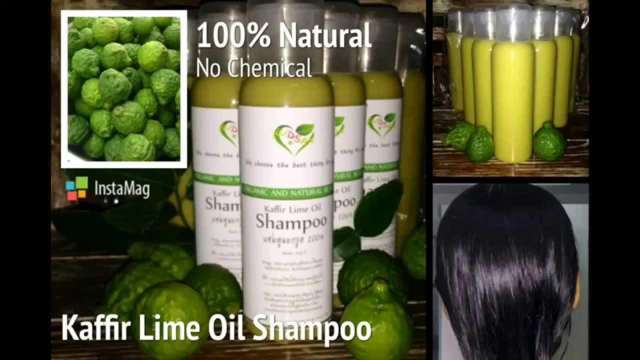 Diy Kaffir Lime Oil Shampoo   U0e27 U0e34 U0e18 U0e35 U0e17 U0e33 U0e41 U0e0a U0e21 U0e1e U0e39 U0e21 U0e30 U0e01 U0e23 U0e39 U0e14