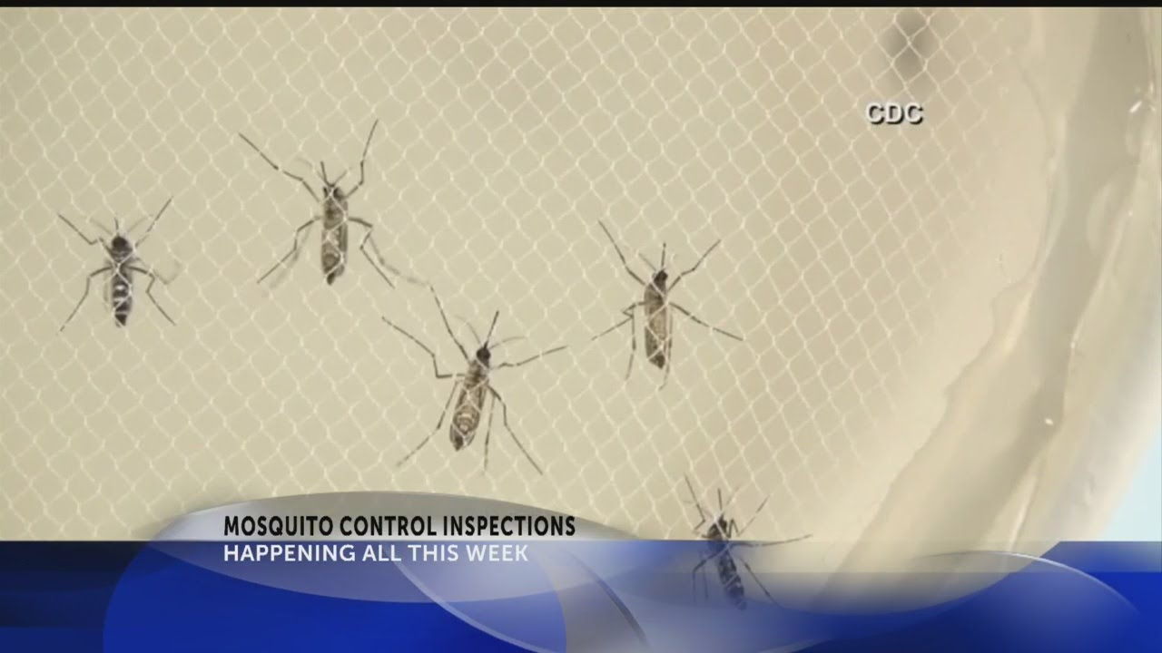 Charleston County to inspect standing water for mosquitoes