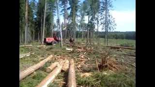 Ścinka drzew Harwesterem
