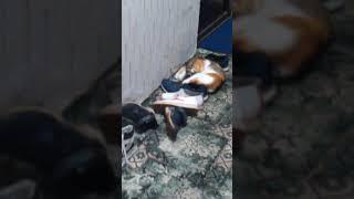 Наша кошка хочет ,секса