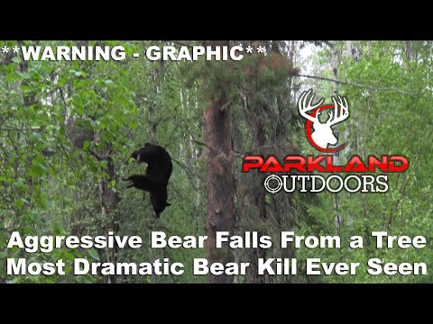 Aggressive Bear Falls From a Tree **WARNING – GRAPHIC**  Most Dramatic Bear Kill Ever Seen