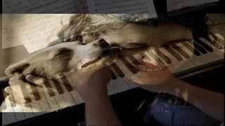 True Love - Cole Porter - Piano
