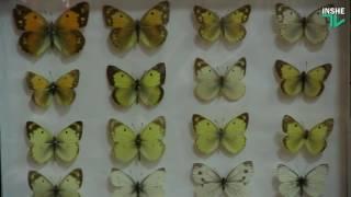 «Загадочный мир»: в краеведческом музее открылась выставка насекомых