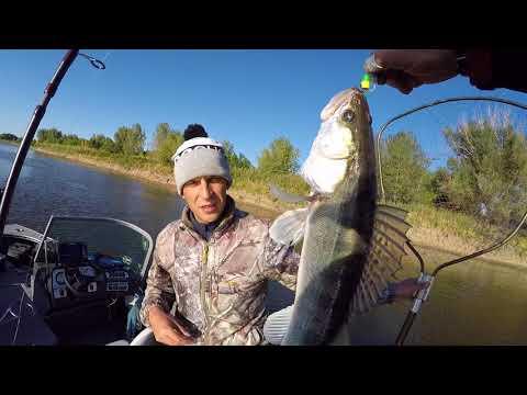 Рыбалка в Астрахани! Волга, Енотаевка