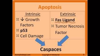 Types of Necrosis and Apoptosis Definition, Caspase Programmed Cell death Bleb Fas Ligand Fat