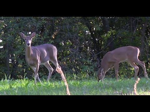 This is Why You're Not Seeing Bucks - Deer & Deer Hunting TV