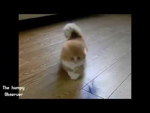 Compilation de la chienne d039olet oh - 1 part 10