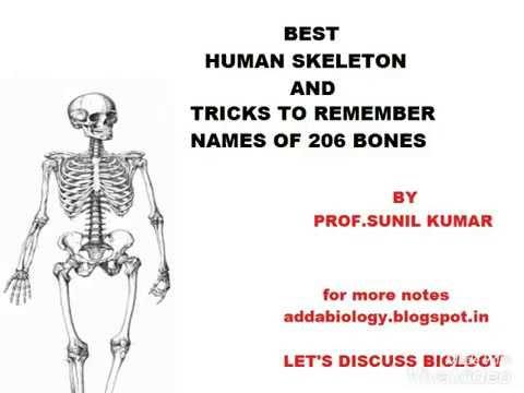Best Human Skeleton Shortcut Youtube