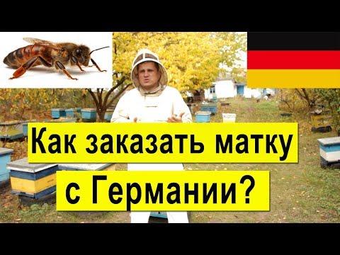 Как заказать матку с Германии? Карника, Бакфаст, Итальянка, осмотр племенных пчелосемьей на пасеке