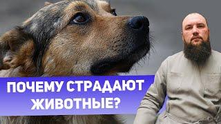 Почему страдают животные? Священник Максим Каскун