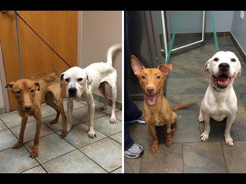How two skinny Dogs life has changed forever Emmy was adopted Oscar still waiting for adoption