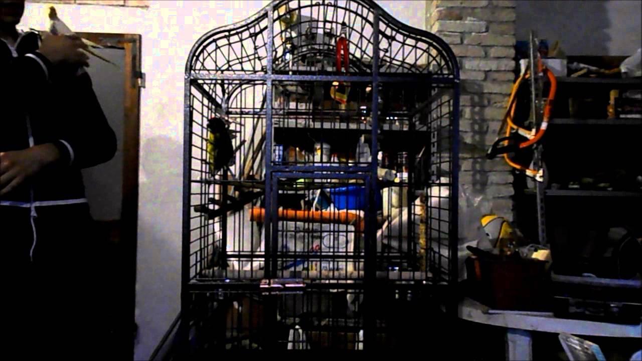 La gabbia giusta per i vostri pappagalli federico for Youtube la gabbia