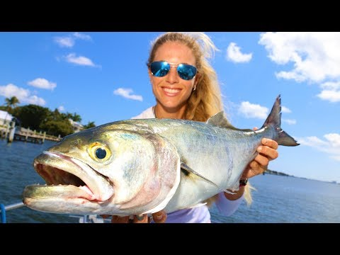 DEEP SEA Fishing In ROUGH Seas + Bluefish Surprise Catch!