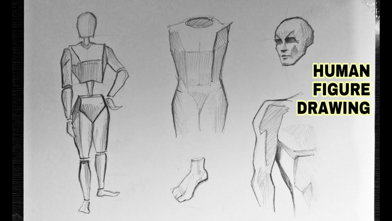 How To Draw Human Anatomy Easily For Beginners Youtube