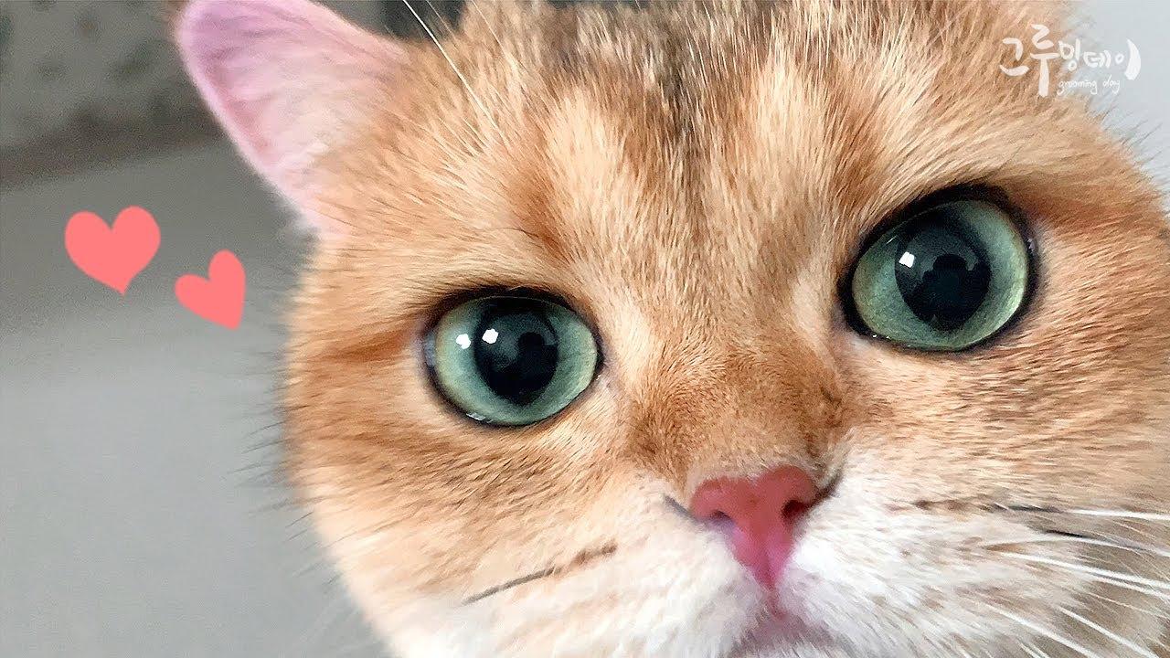 고양이는 자기가 귀여운걸 알까요?