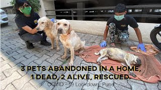 Abandoned Pet Dogs Rescued from a Home during COVID-19 Lockdown in Pune - India