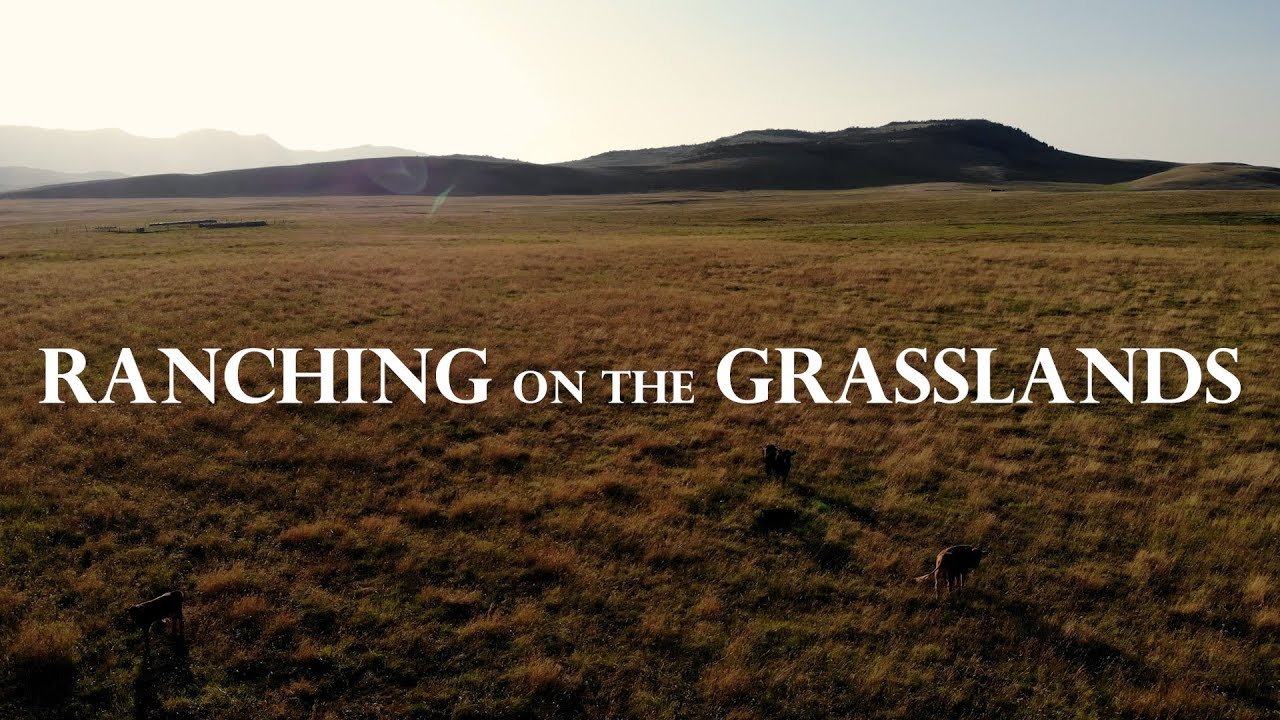 Ranching on the Grasslands - My Rode Reel 2020