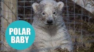 First polar bear cub born in Britain