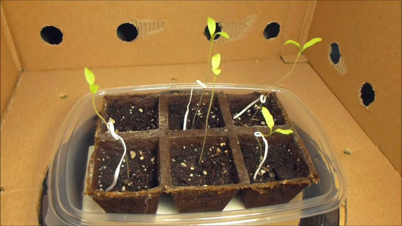 effect of music on plant growth investigatory project