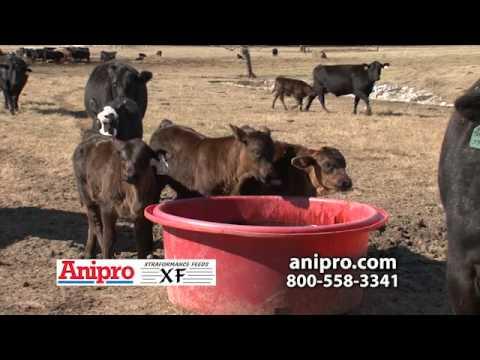 Anipro/Xtraformance Feed - RFD Segment Jan 2014